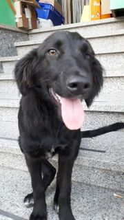 Strassenhund Blacky kann bald ausreisen