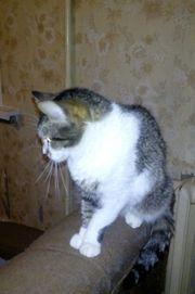 Katze Trischa sucht ein liebevolles