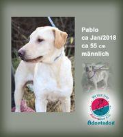 Pablo - Auch wenn ich nicht