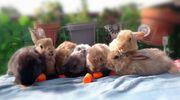 3 Monate aalte Kaninchenjungen suchen