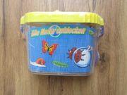 Becherlupe Insektenbox