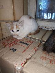 Junge Kätzchen Kater Katze sucht
