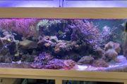 Meerwasseraquarium komplett abzugeben
