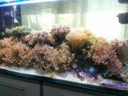 Meerwasseraquarium Inhalt