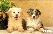 Familien Therapiehund Gesuch