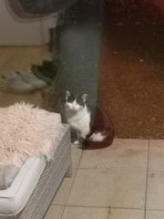 Wer vermisst diese katze