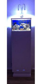 nano Meerwasser Aquarium