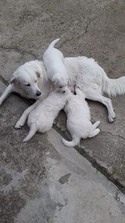 Giada und ihre 3 Welpen