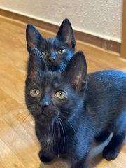 Katzenbrüder ab sofort auszugsbereit