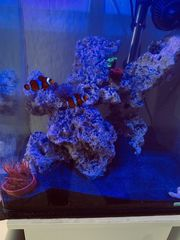 Salzwasseraquarium mit Besatz und Technik