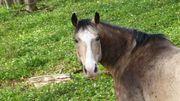 Kinder Pferde Bodenarbeit Sitzschulung Reitunterricht