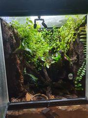 Regenwaldterrarium Exoterra 45x45x60