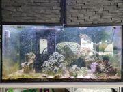 400l aquarium