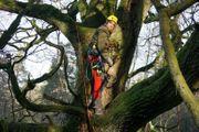 Baumarbeiten Baumkletterer Baumpflege Baumschnitt Baumdienst