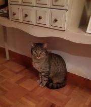 Katze Pepa sucht ein Zuhause