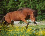Pferdeversorgung gesucht