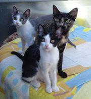 Kleine Katzenfamilie sucht ein Zuhause