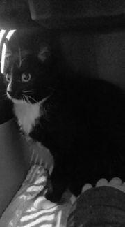 liebevolle Katze abzugeben