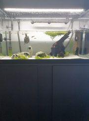 Aquarium komplett mit Besatz