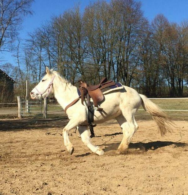 Appaloosa Pony zu Verkaufen
