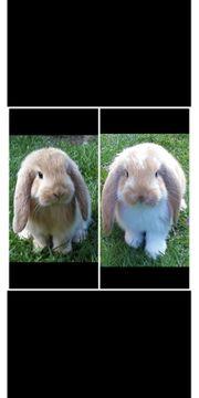 2 liebe Kaninchen