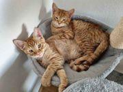 Katzenteenies suchen ein schönes Zuhause