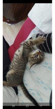 hat jemand katzen Zubehör zu