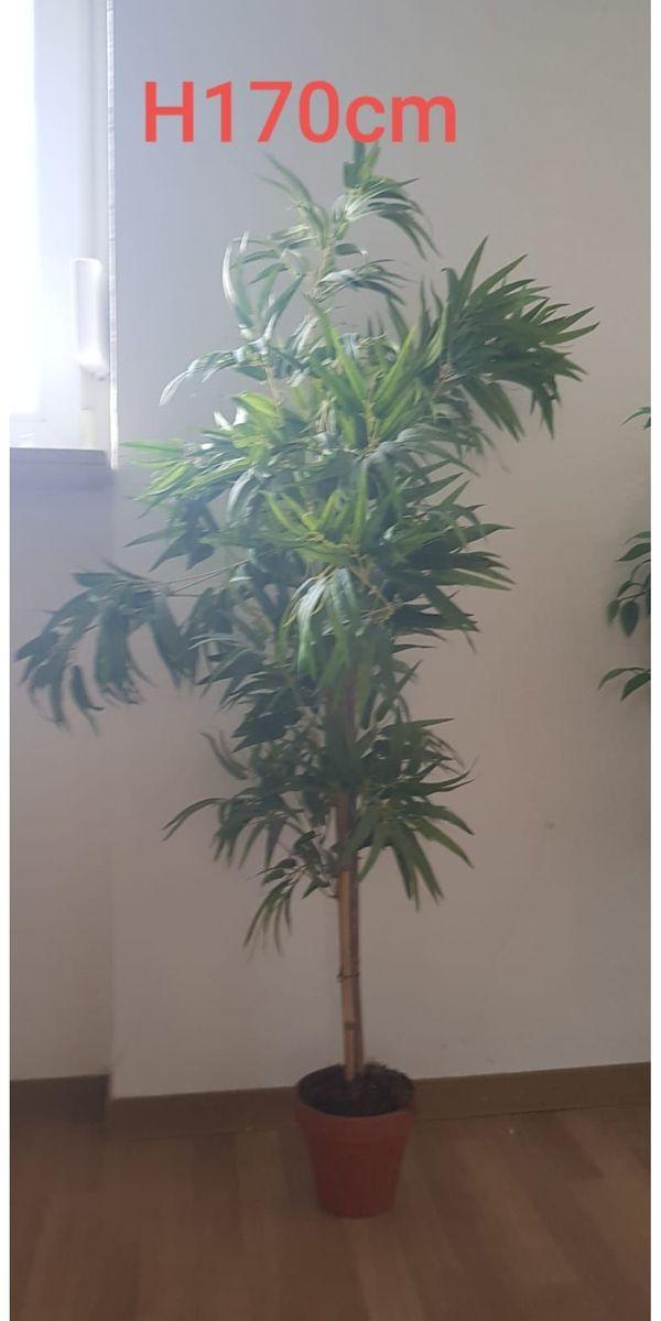 Bambus Künstlich
