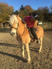 Charakter Pferd sucht Reitbeteiligung