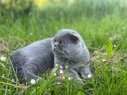 Deckkater sucht eine Katze