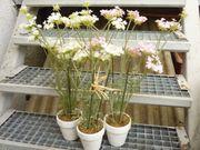 3 Kunstpflanzen Höhe 53cm