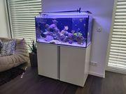 Meerwasser Aquarium Eheim Proxima Reef
