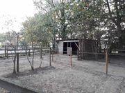 Offenstallplatz auf Reitanlage in Steinhude