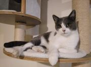 4 jährige kastrierte Katzendame sucht