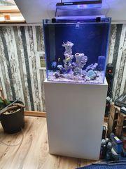 Meerwasser Aquarium 120Liter