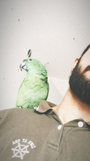 Gelbnackenamzone zahm Käfig Papageistände und