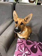 Kurze Beine lange Ohren großes