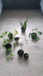 Verschiedene Zimmerpflanzen in unterschiedlichen Größen