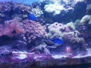 Meerwasser Aquarium ca 600l leer