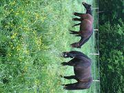 Pferdestellplätze