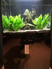 Aquarium Eheim incpiria 200 inkl