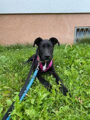 Linus 7 Monate auf Pflegestelle