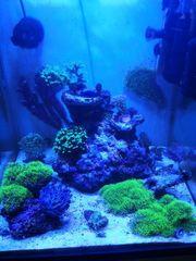NanoCube 60l Dennerle komplett Meerwasseraquarium