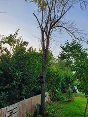 Verschenkt werden 3 Bäume zum