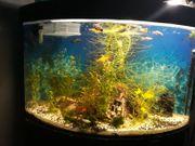 Aquarium 90 l