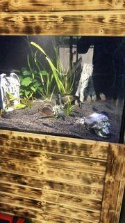 Piranha Gruppe 9 Stück