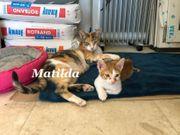 Matilda aus dem Tierschutz sucht