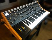 Moog Subsequent 37 paraphoner 2-stimmiger