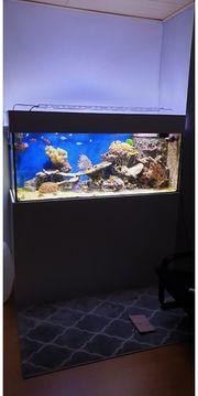 2 Jahre altes Meerwasseraquarium zu