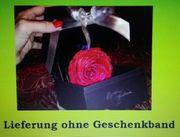 Die letzte verfügbare Rose mit